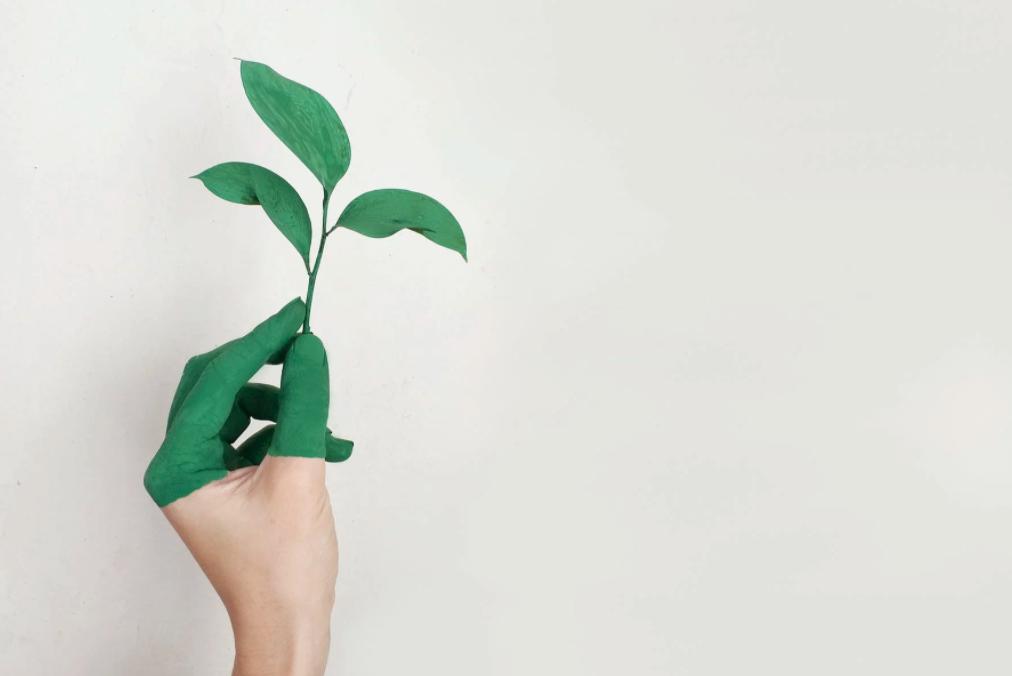 Desarrollo sustentable empresa